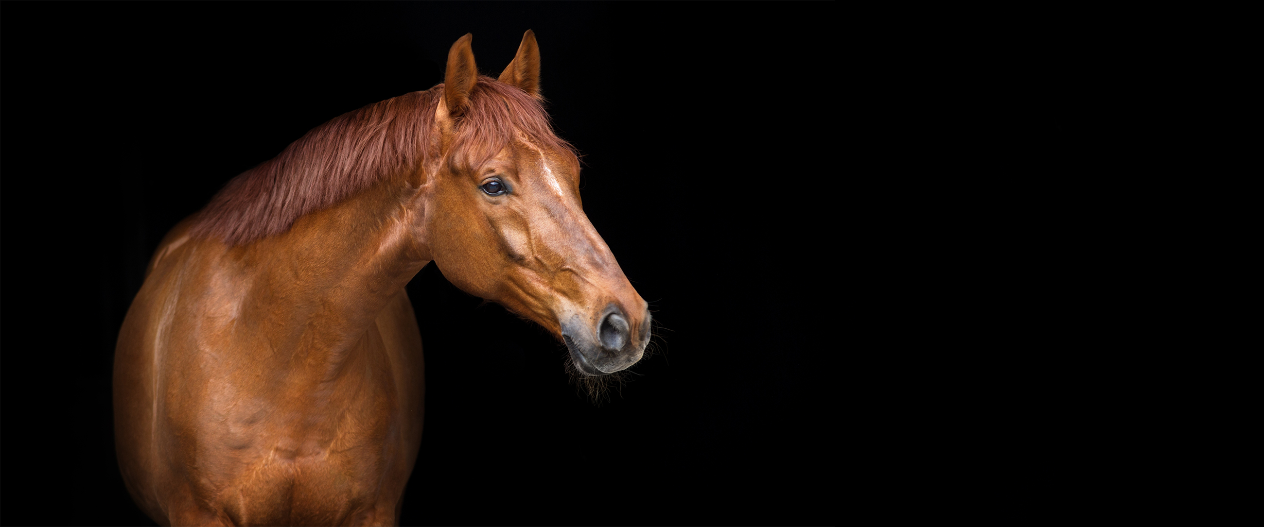Equine Radiology – Page