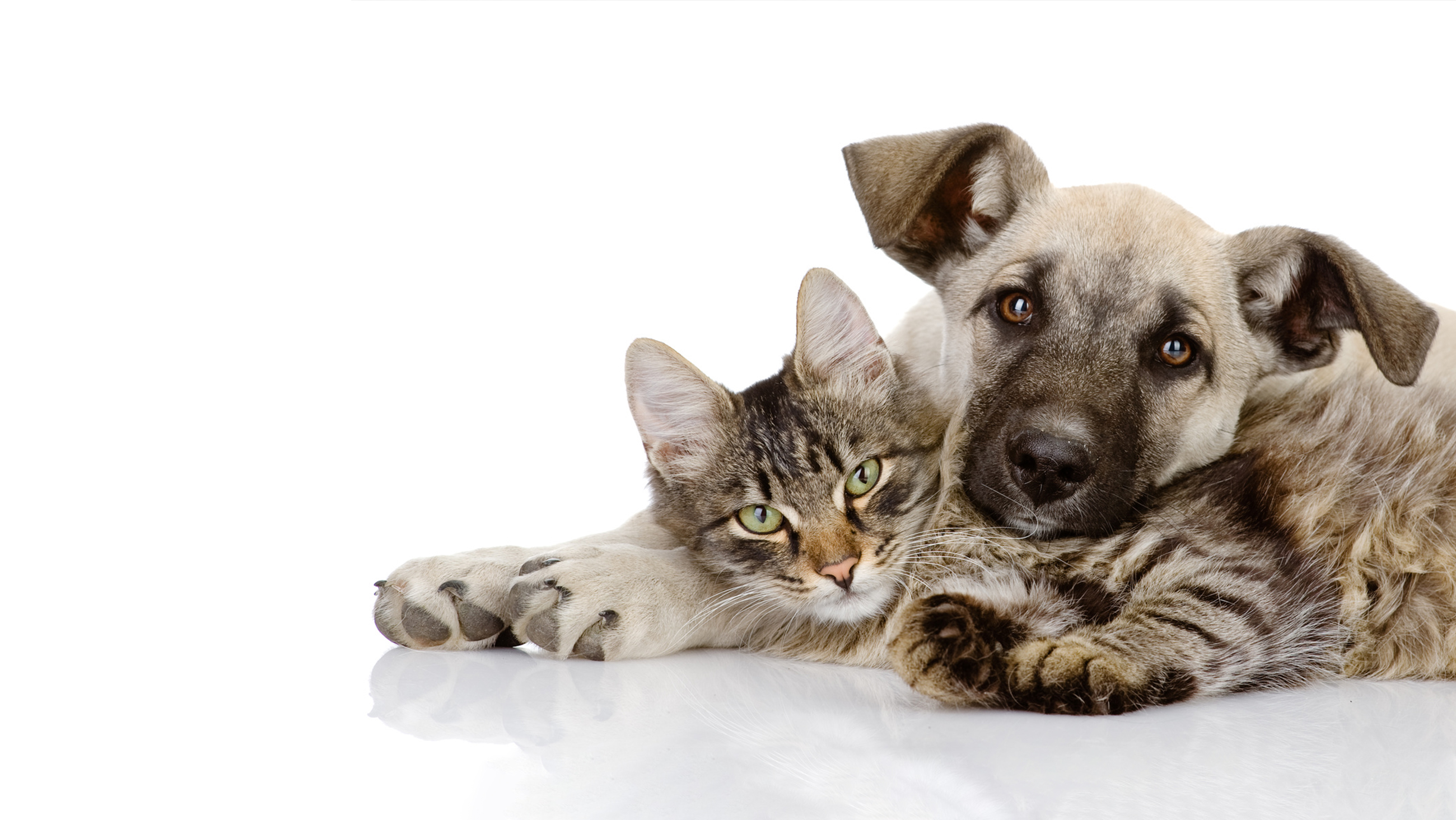 Small Animal Anesthesia – Home