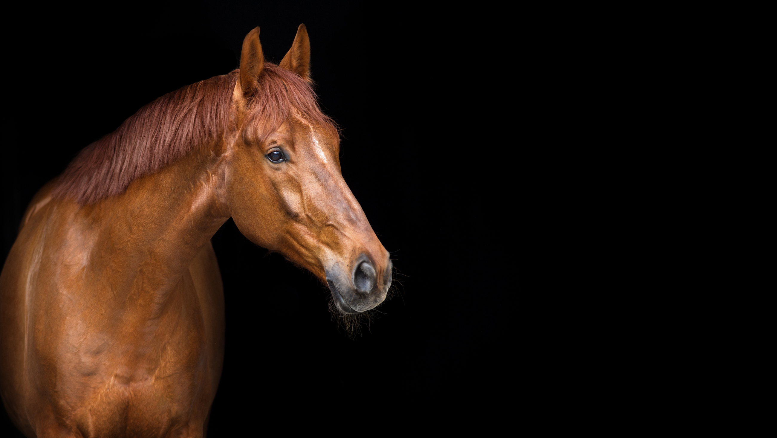 Equine Radiology – Home