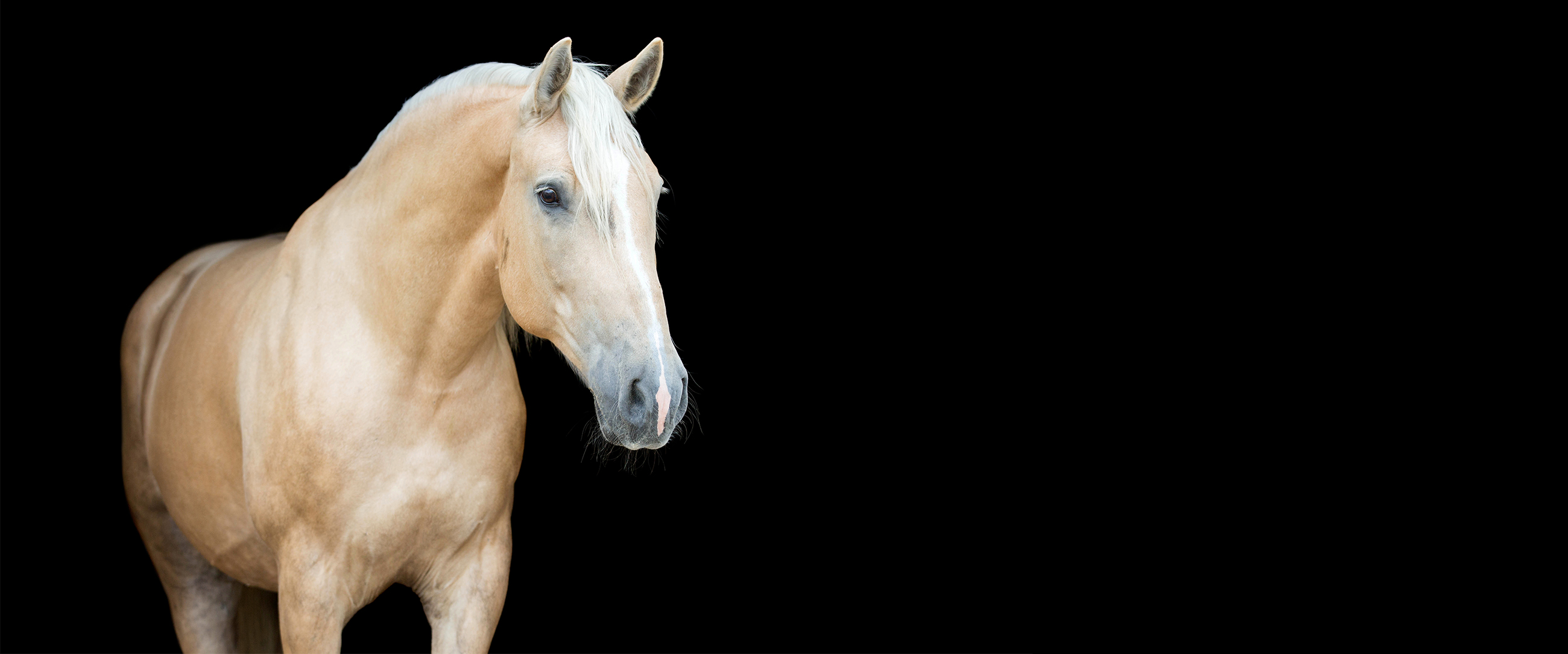 Equine Surgery and Wound Care – Page