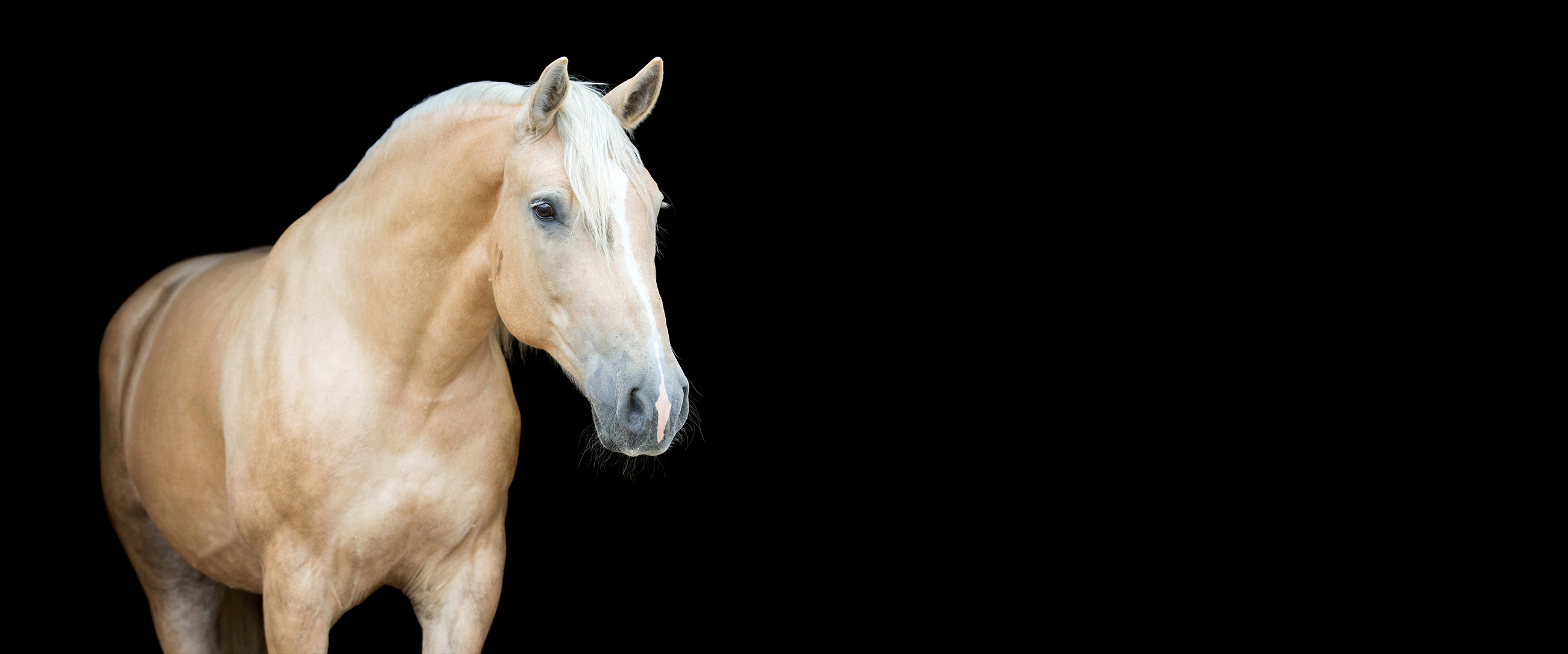 Equine Surgery and Wound Care – Home