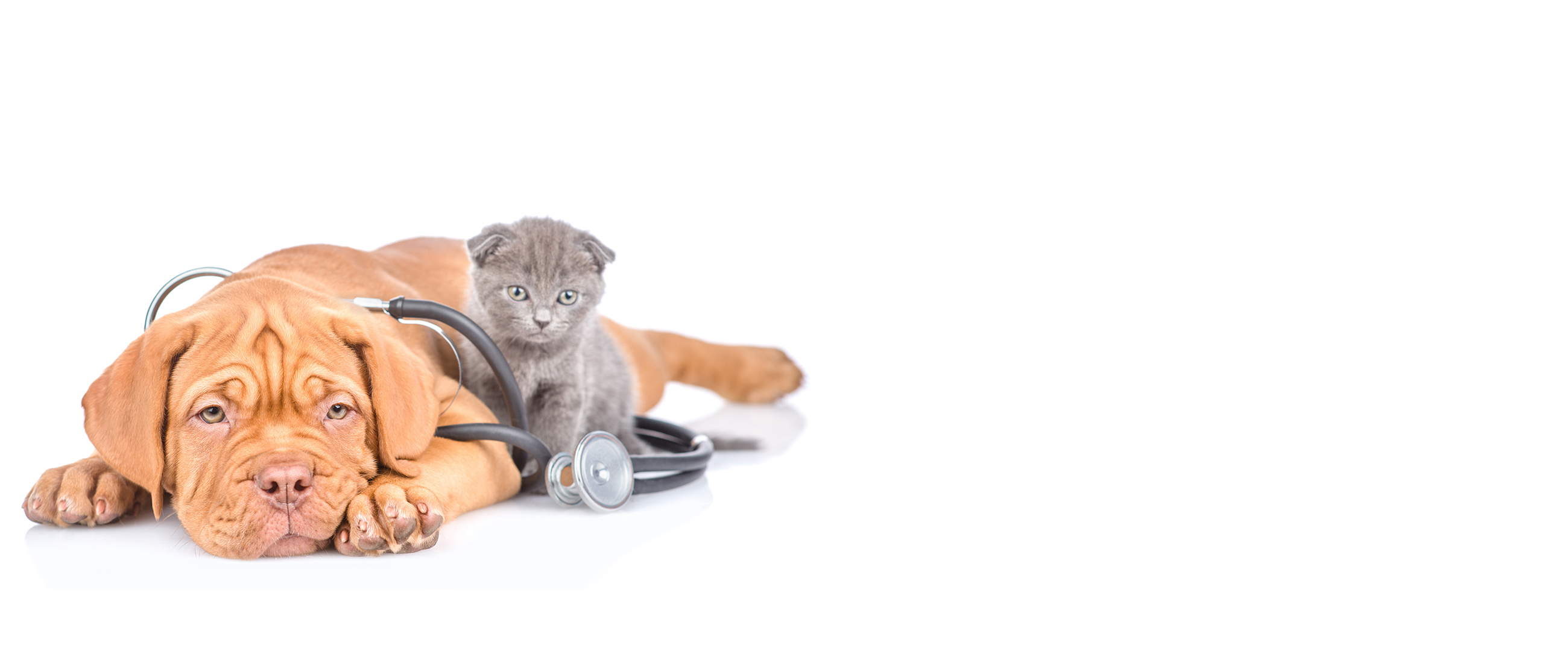 Small Animal Emergency & Critical Care – Page