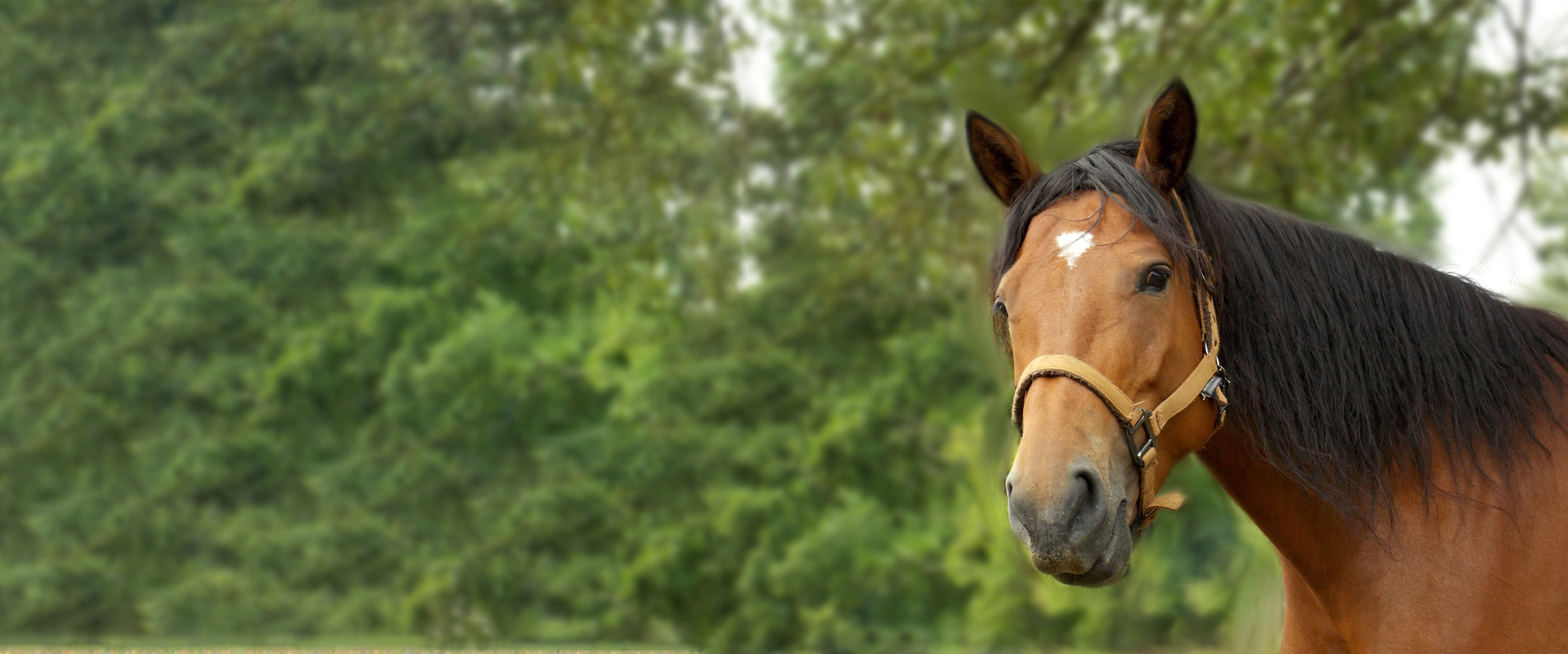 Equine Dermatology Case Studies Part 1 – Page