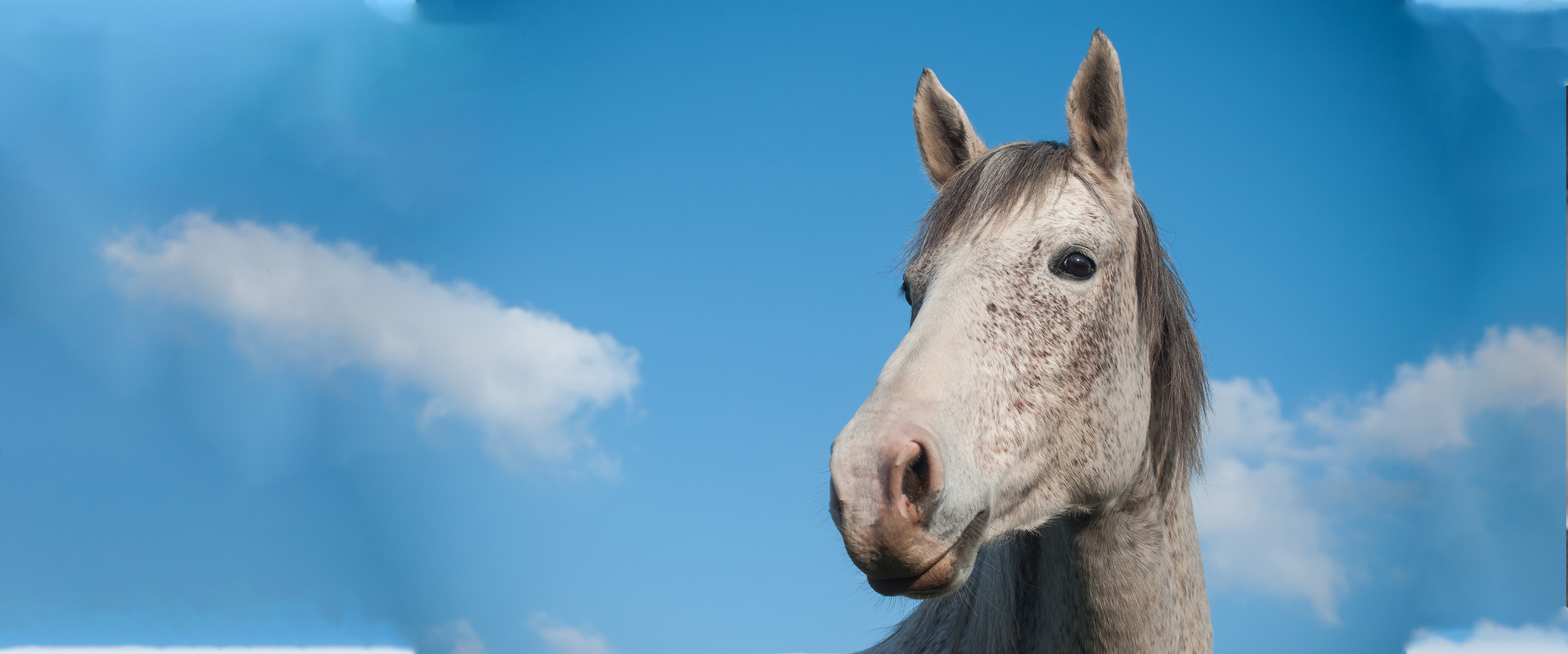 Equine Dentistry Updates for Improved Standard of Care & Services – Page